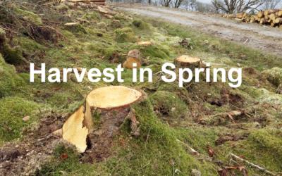 Harvest in Spring