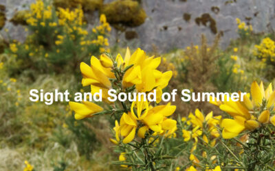 Sight and Sound of Summer