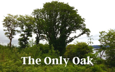 The Only Oak