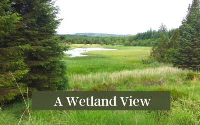 A Wetland View